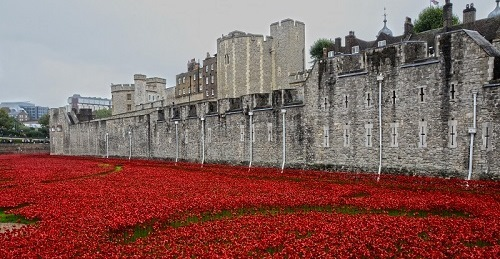 Tower of London poppies small  - photo credits Yuval Weitzen.jpg